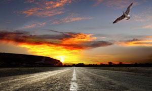 翱翔的飞鸟与阳光道路摄影高清图片