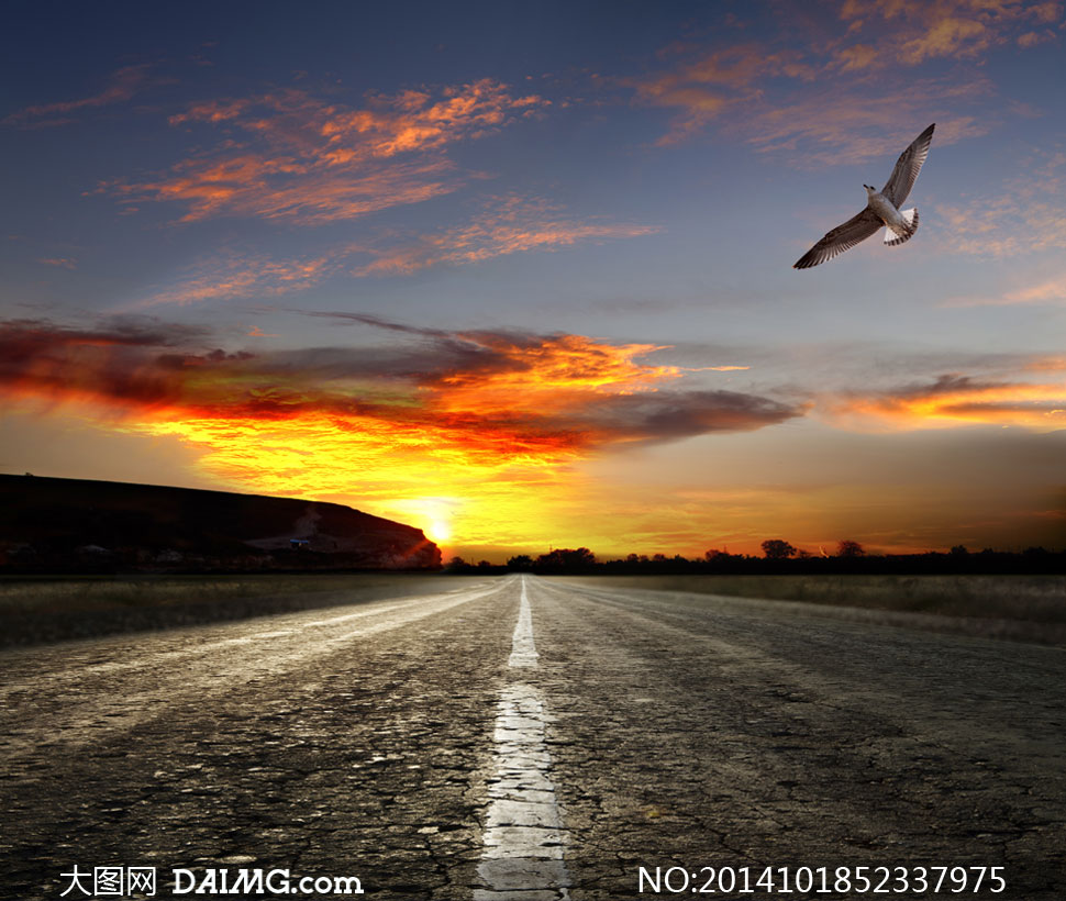 翱翔的飞鸟与阳光道路摄影高清图片图片