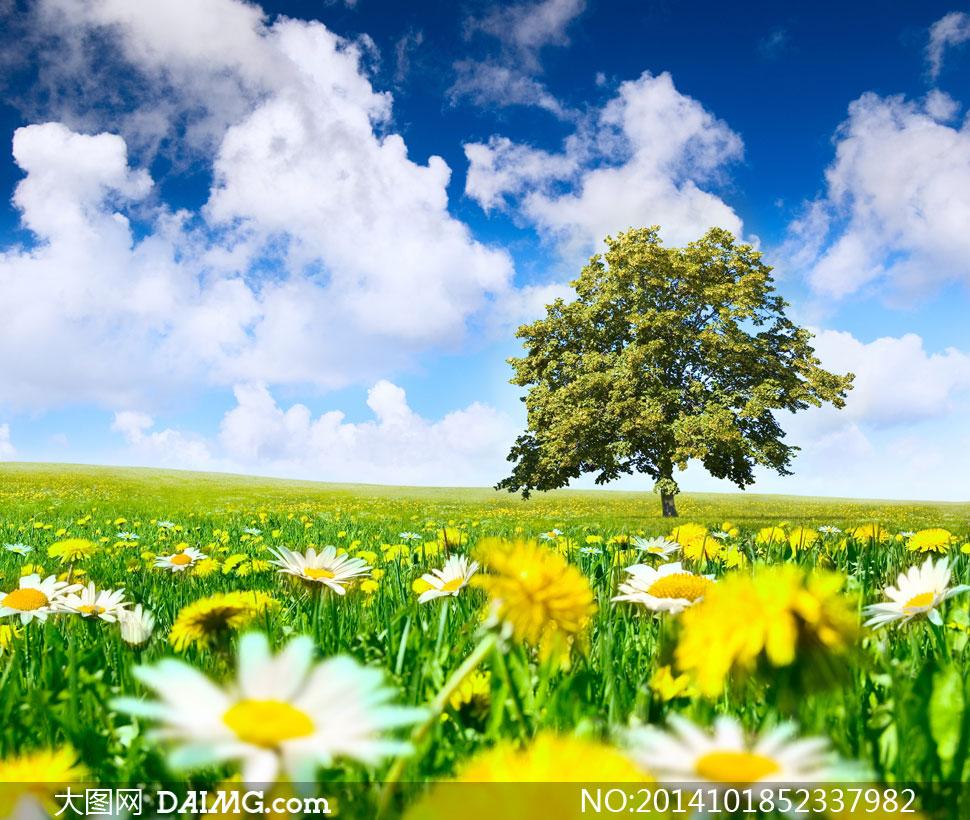 蓝天白云大树 花草 风景摄影高清图片