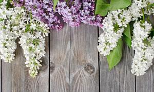 放在木板上的鲜花特写摄影高清图片