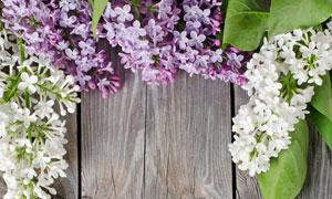 木板上的白色与紫色花摄影高清图片