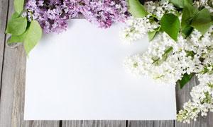 散发着花香的空白卡片摄影高清图片