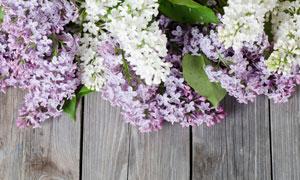 在木板上放着的丁香花摄影高清图片