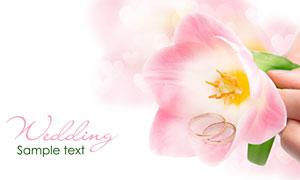 捏在手里的粉红色花朵摄影高清图片