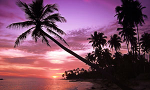 紫色天空與海邊的椰樹攝影高清圖片