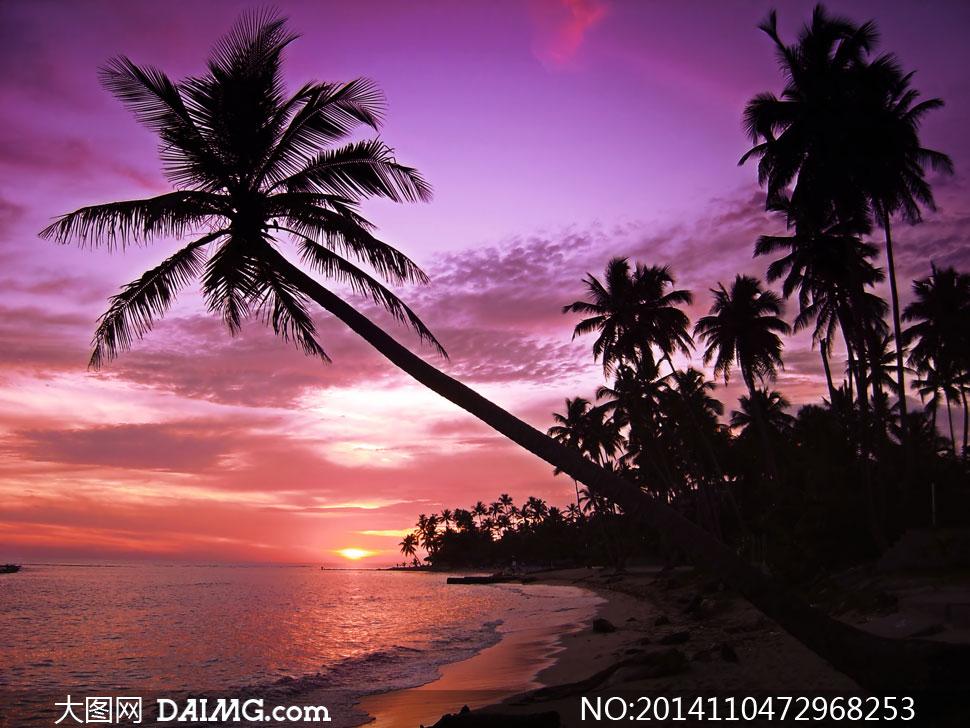 紫色天空与海边的椰树摄影高清图片 - 大图网设计素材下载