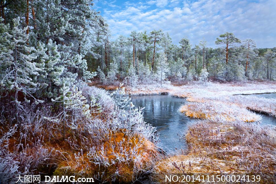 风景摄影图片素材下载 关键词: 冬季冬天冬日雪景雪后森林树林树木