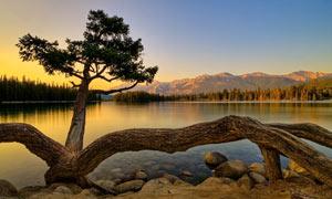 平静的湖泊黄昏美景摄影图片