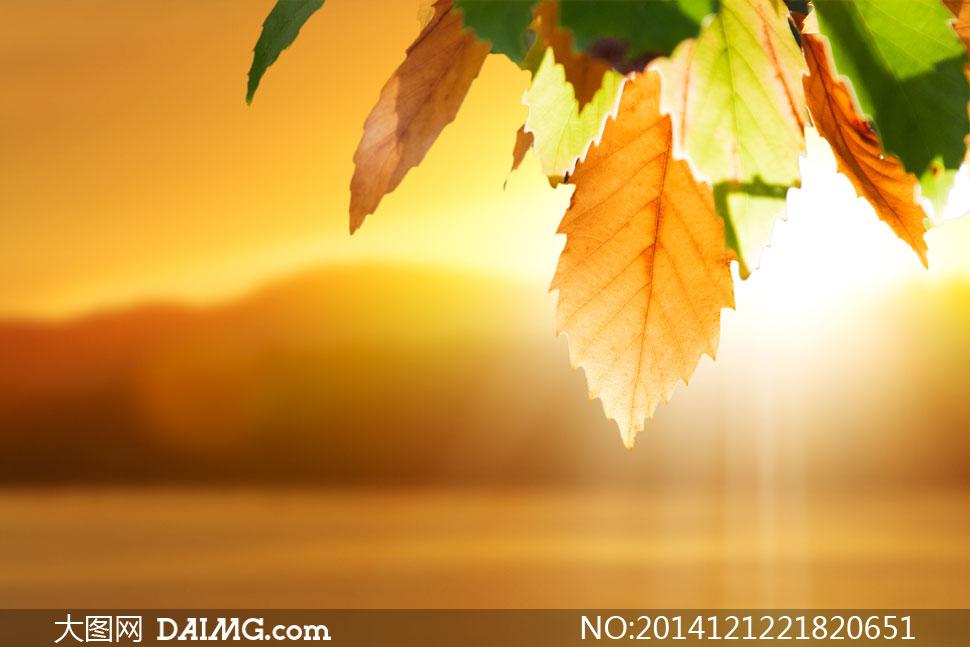 耀眼阳光与树叶的微距摄影高清图片