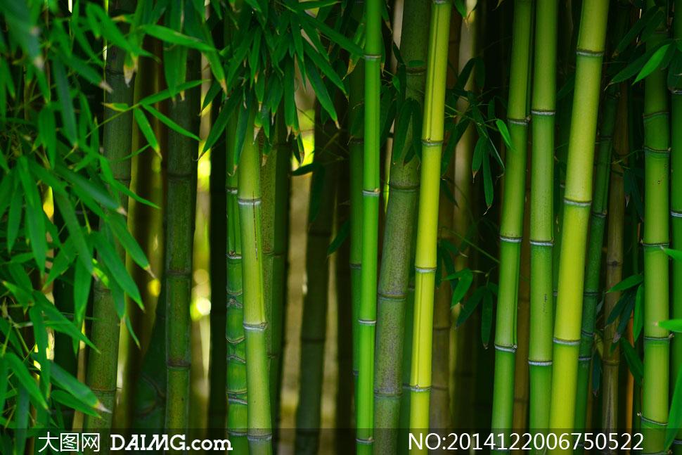 青绿色的竹子近景特写摄影高清图片
