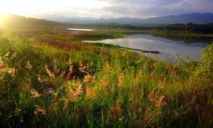 远山与杂草丛生的河边风光高清图片