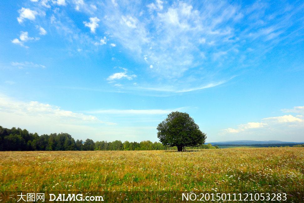 藍天花草樹木自然風景攝影高清圖片