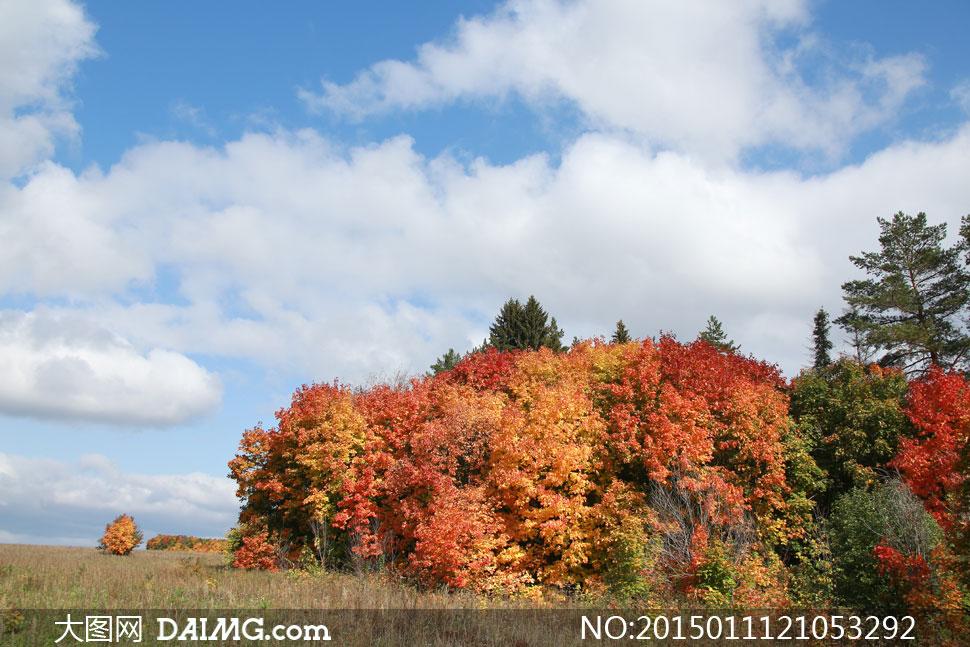 秋天时节蓝天白云树木摄影高清图片