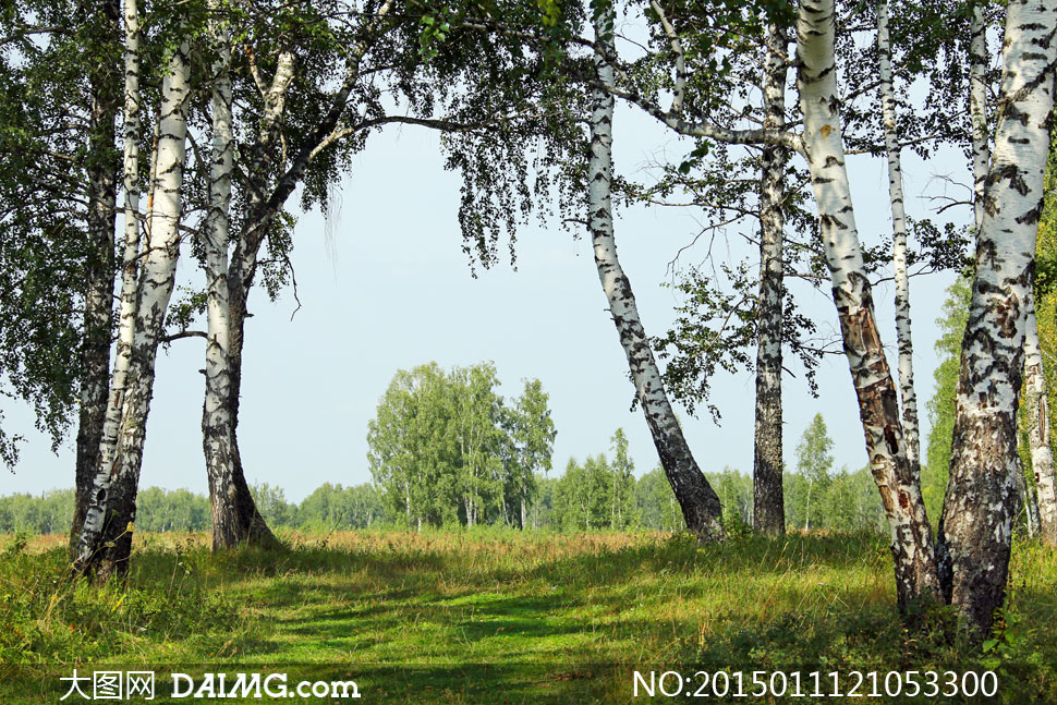 大树草丛与远处的树林摄影高清图片