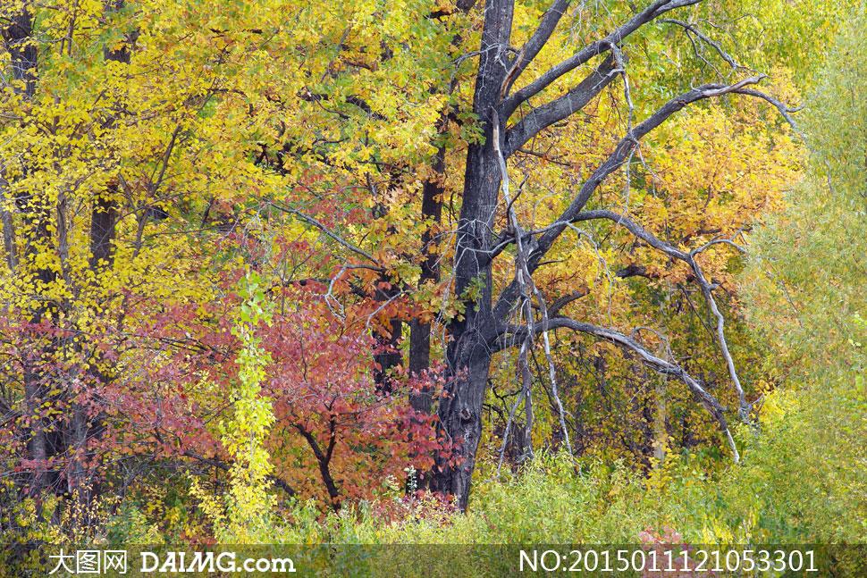秋天枝繁叶茂树林风景摄影高清图片