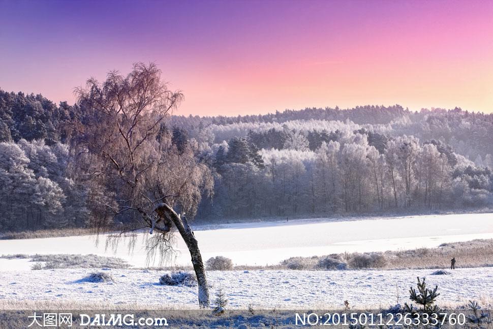 高清摄影大图图片素材自然风景风光冬天冬季树木树林大树雾凇雪景