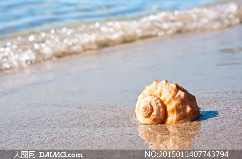 风光海螺贝壳海水海边大海海景海滩沙滩近景特写微距