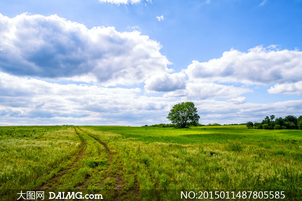 高清摄影大图图片素材自然风景风光天空云彩云层多云蓝天白云大树