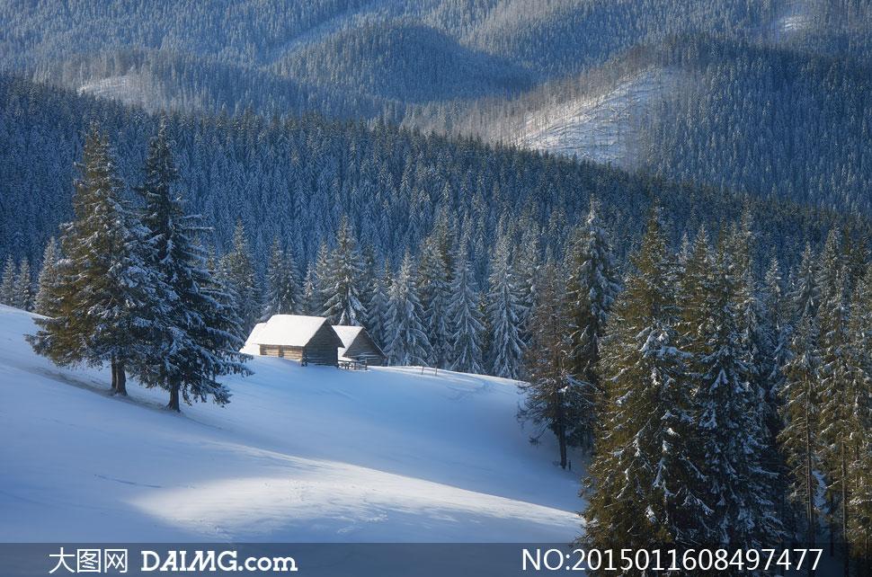 高清摄影大图图片素材自然风景风光大树树木树林房子房屋小屋雪景雪地