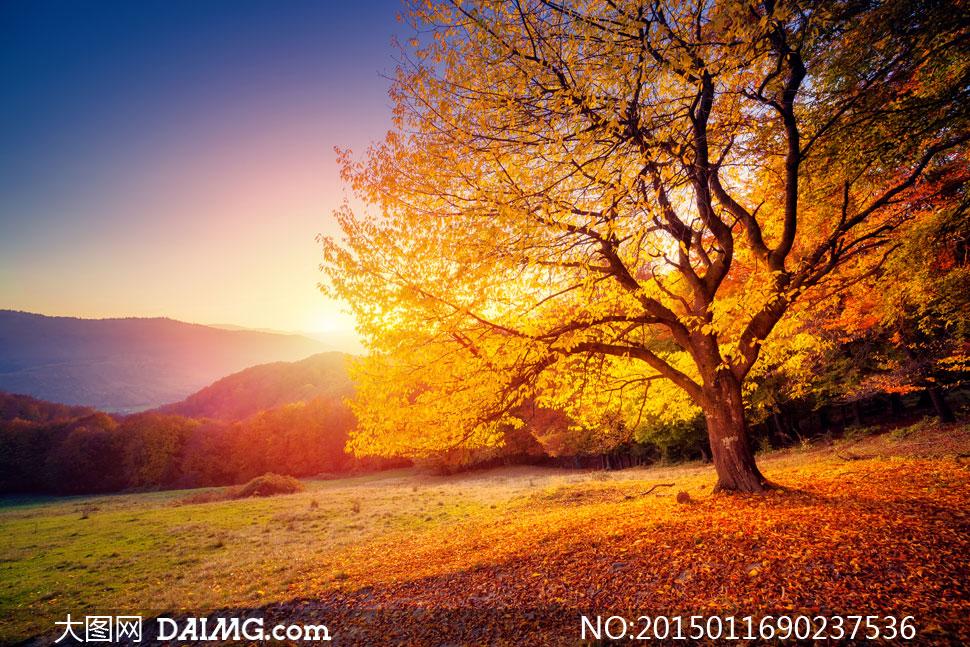 阳光照耀下的秋天树木摄影高清图片
