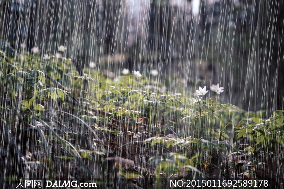 【原创】急骤的暴雨 - 漂泊的云 - 漂泊的云的博客