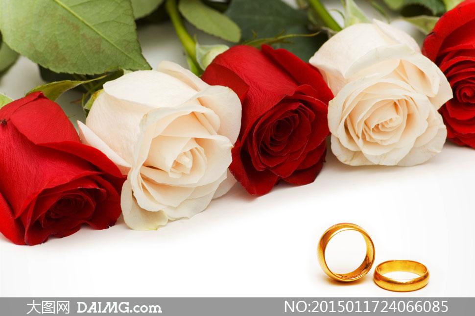 红玫瑰花与金戒指近景摄影高清图片 - 大图网设计素材