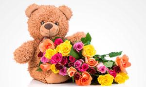 泰迪熊玩具与玫瑰花朵摄影高清图片