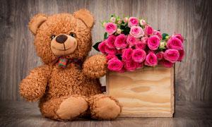 泰迪熊玩具与鲜艳花朵摄影高清图片