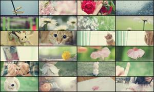 25张淘宝温馨淡雅广告背景图片