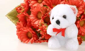鲜花与可爱白色玩具熊摄影高清图片