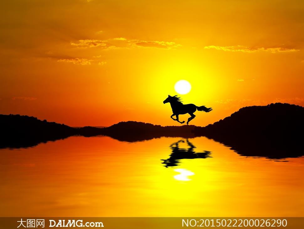 夕阳下海边奔跑的骏马摄影图片