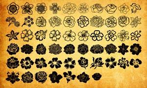 美麗的花朵和花卉PS形狀