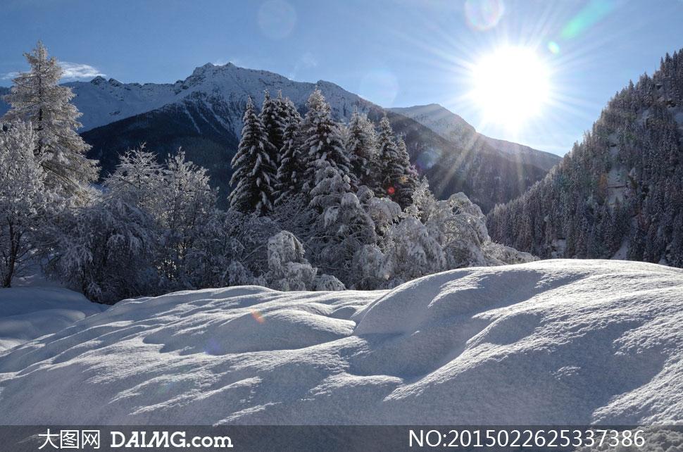 高清大图图片素材自然风景风光冬天冬季树木