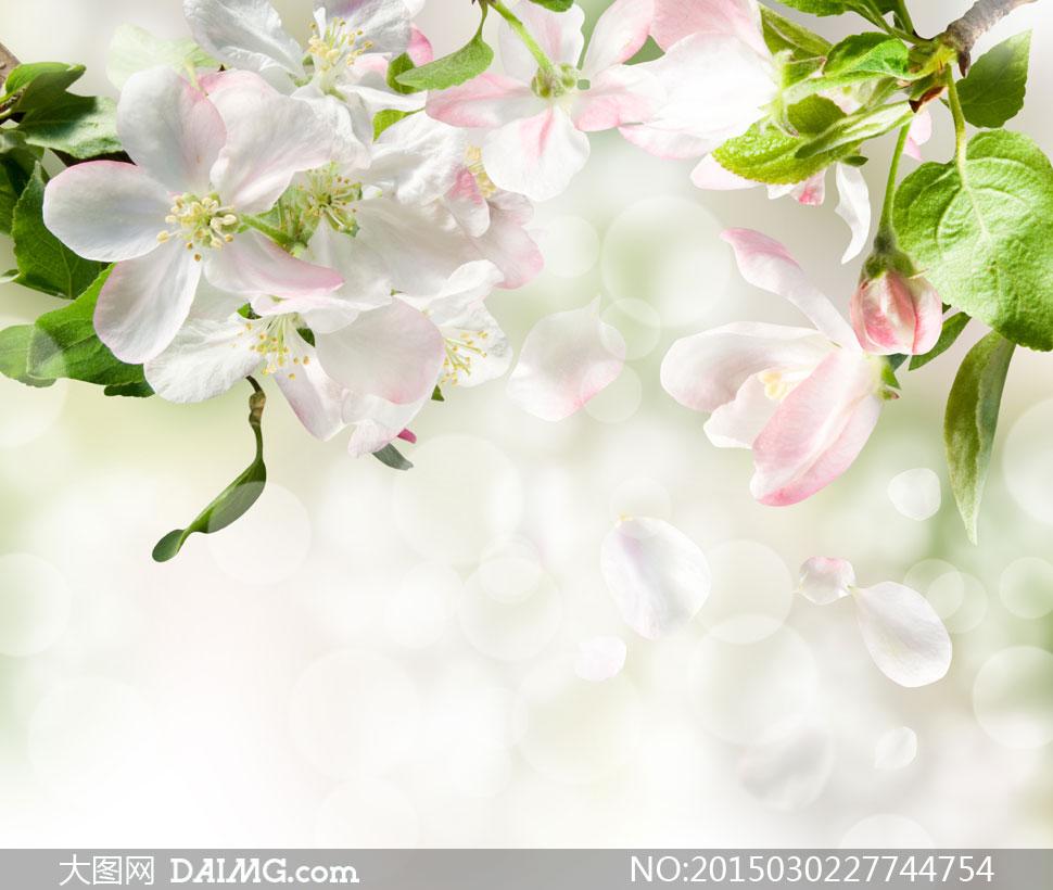 蝴蝶与紫色风铃草特写摄影高清图片