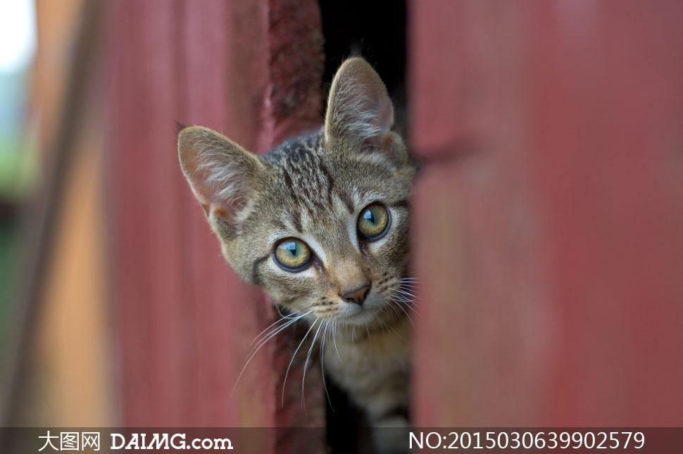 特写微距动物宠物喵星人猫咪小猫可爱模糊朦胧萌萌哒