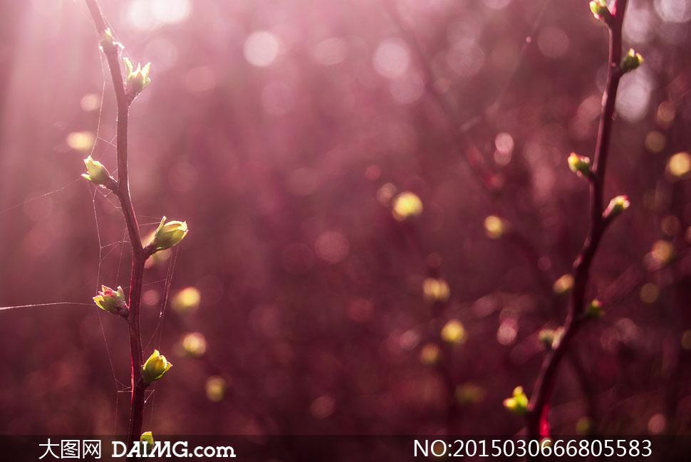 春天已发芽的花卉植物摄影高清图片