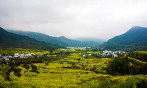 婺源江岭春装外景农田摄影图片