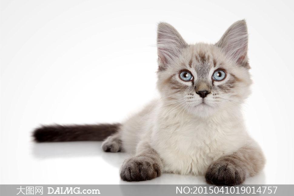 发呆的猫咪摄影高清图片免费下载; 关键词: 高清大图图片素材摄影动物