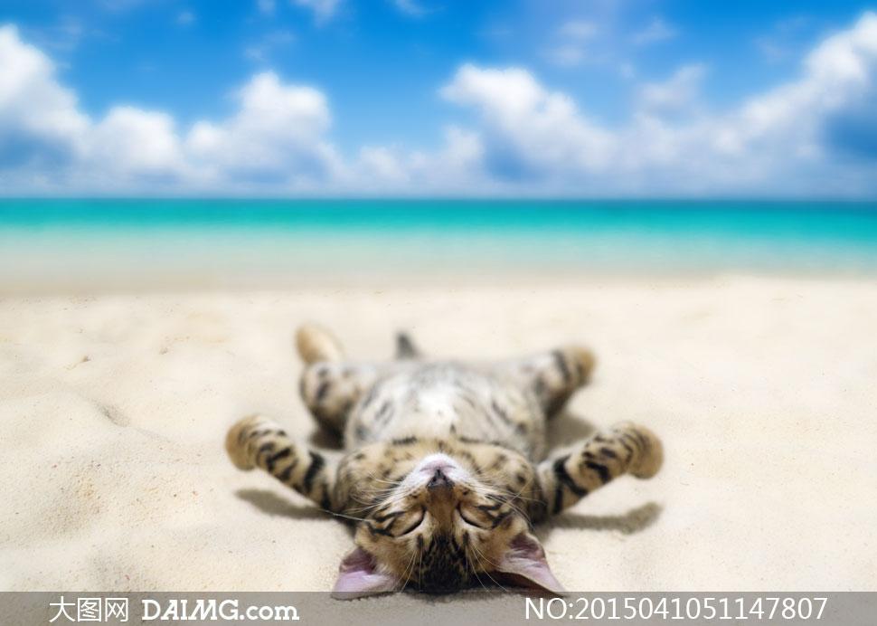 懒猫懒懒的睡觉微距海边大海海面海景蓝天白云云彩云层多云沙滩海滩