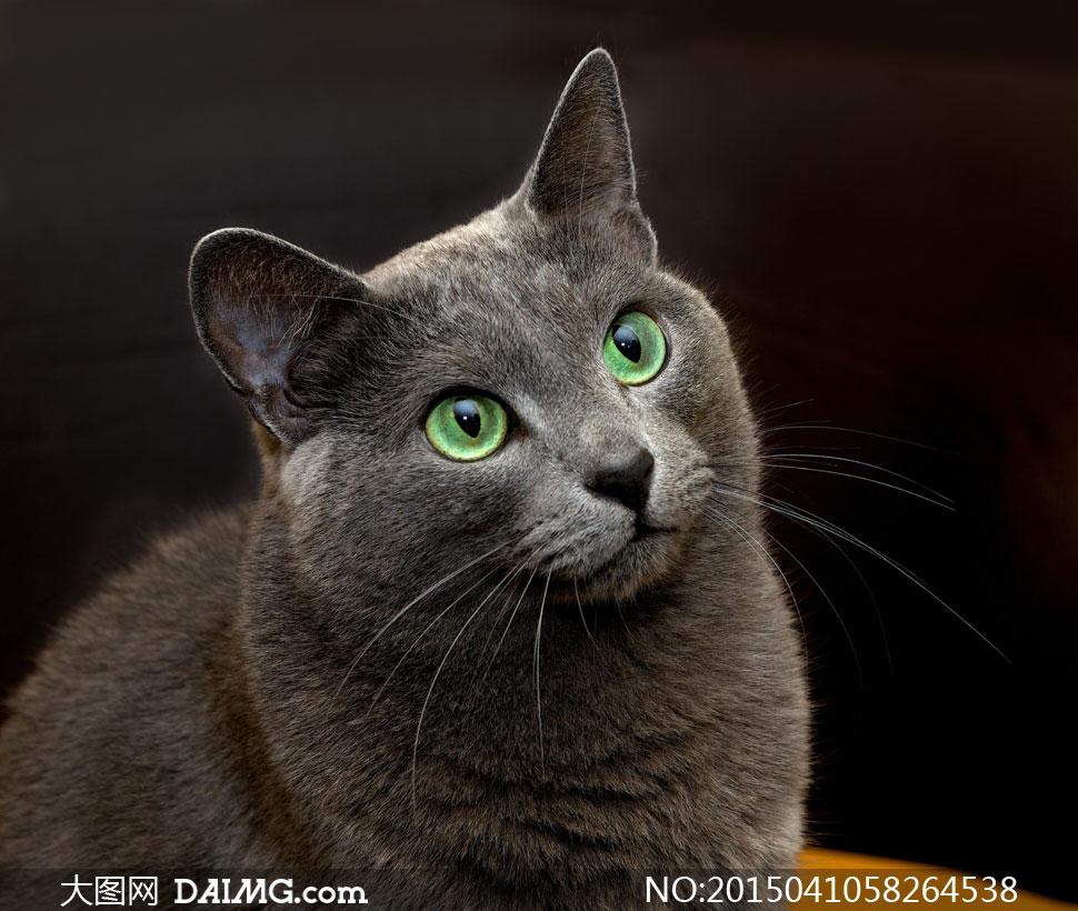 黑色背景前的绿眼睛猫摄影高清图片