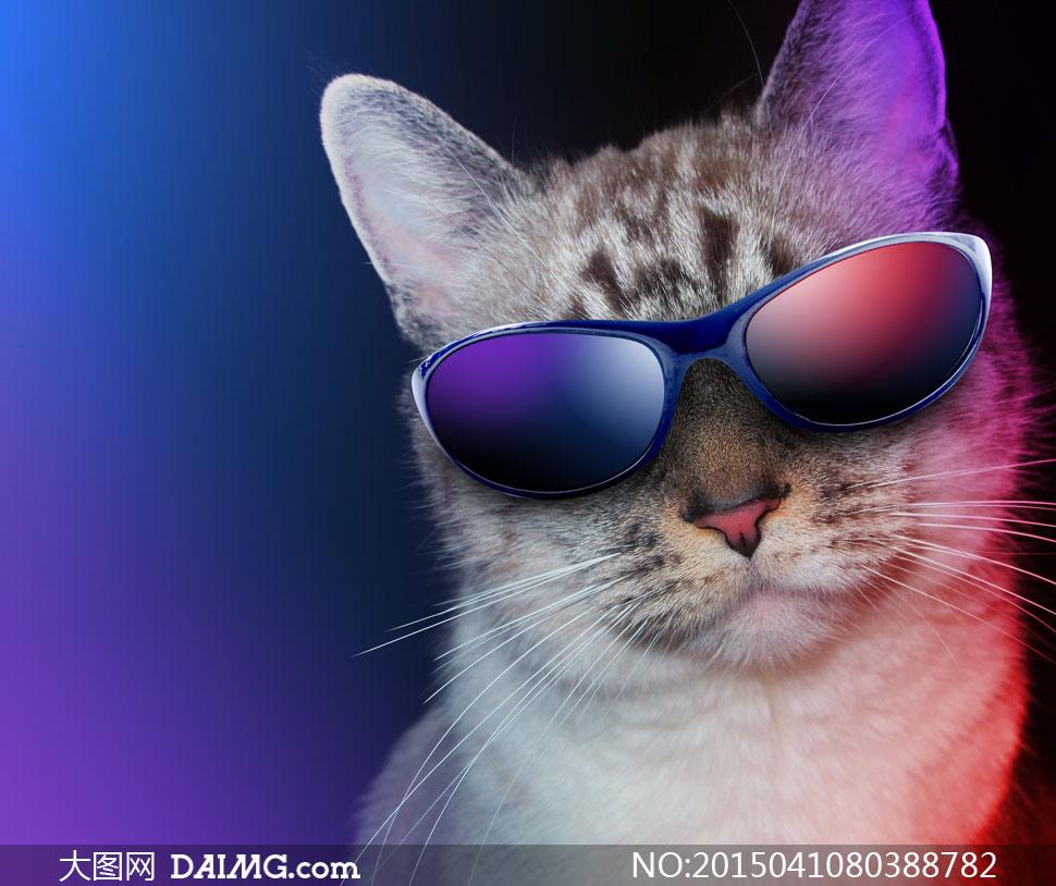 Cat Wallpaper Glasses