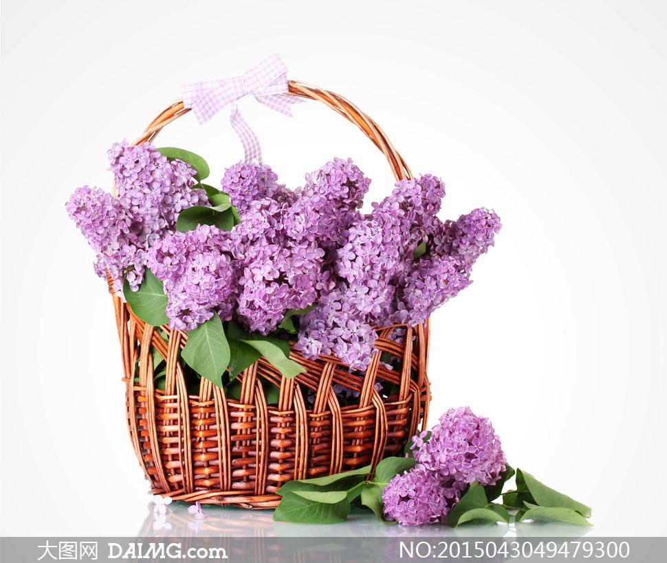 放篮子里的紫丁香鲜花摄影高清图片