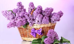 装满篮子的紫色丁香花摄影高清图片