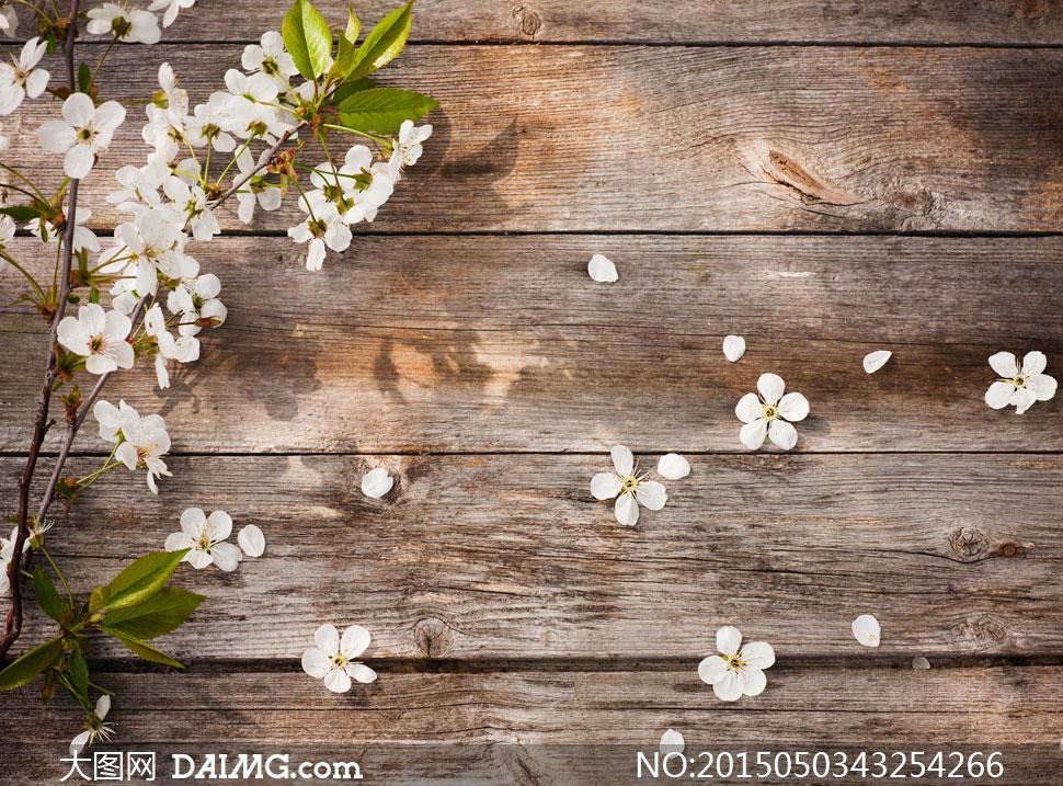 木板上的白色小花特写摄影高清图片