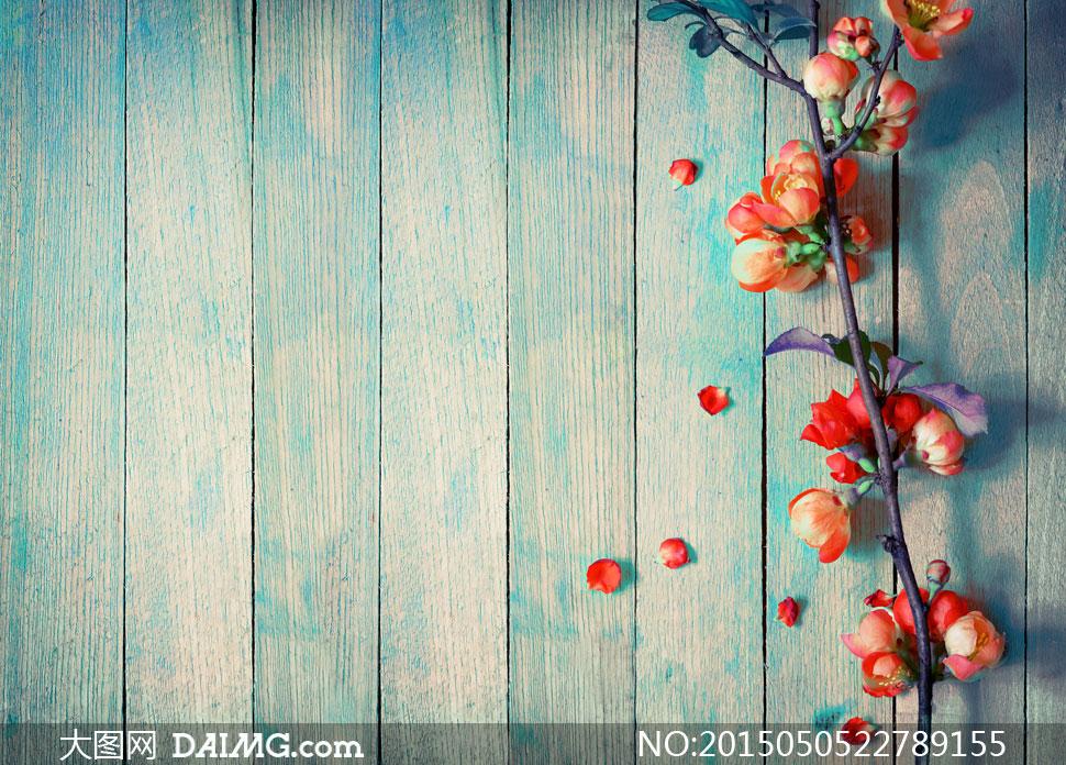 近景特写鲜花花朵花卉植物花瓣花枝树枝木板木纹花苞