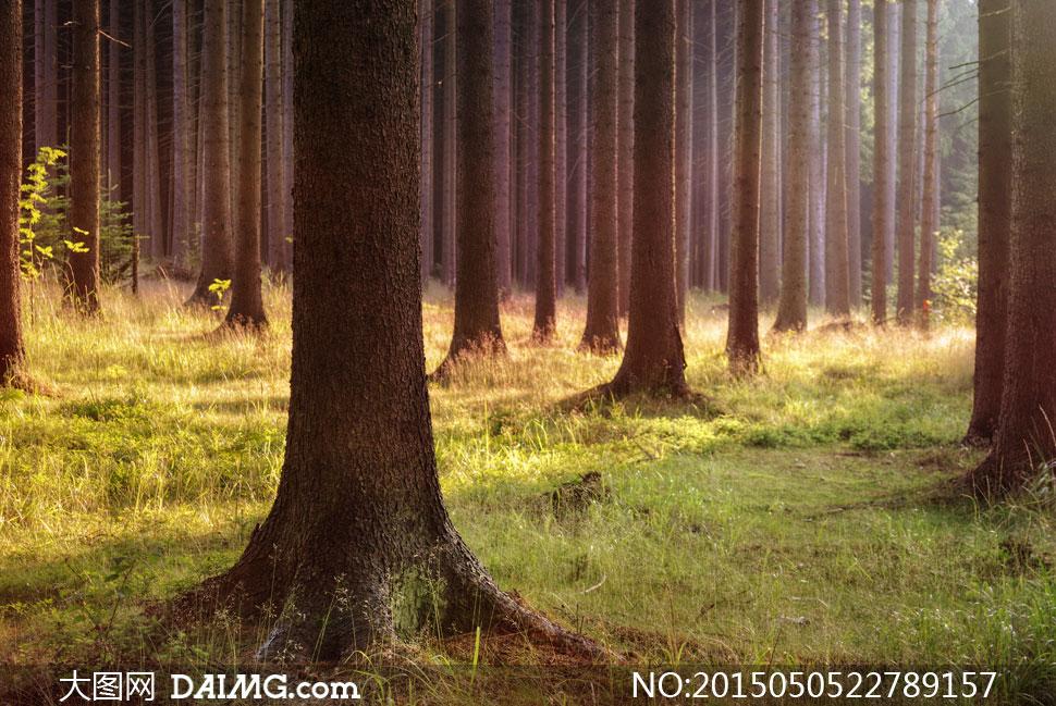 青草绿地树林自然风景摄影高清图片 - 大图网设计素材