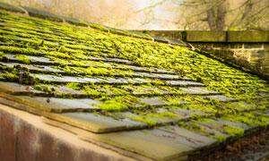 满是青苔植物的房屋顶摄影高清图片