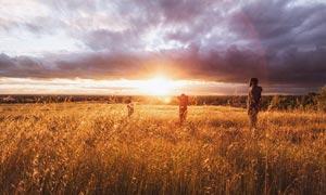 阳光下的秋季农作物摄影图片