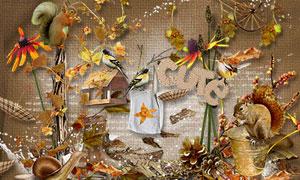 松鼠小鸟与树叶雨伞等欧美剪贴素材