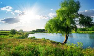 蓝天白云阳光与河边的大树